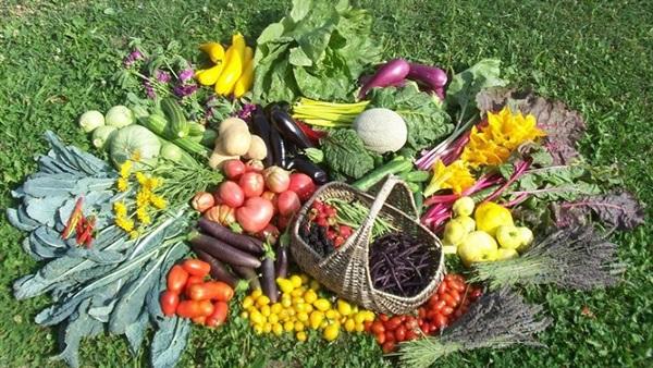 ورشة بألاگ للتكوين على كيفية زراعة الخضروات وتجفيفها